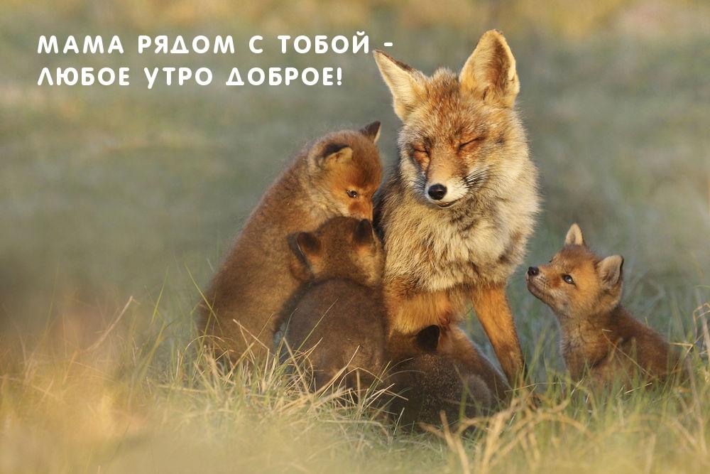 Мама рядом с тобой - любое утро доброе!