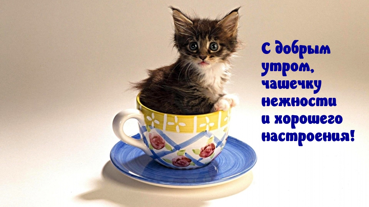 С добрым утром, чашечку нежности?